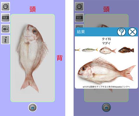教えて!魚